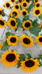 Sunflowers in vase life trials 2017